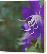 Clematis On The Side Wood Print