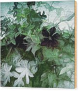 Clematis On The Vine Wood Print