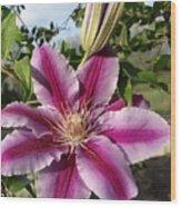 Clematis Petals Wood Print