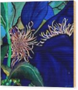 Clematis Regal In Purple And Blue Sold Wood Print