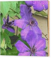 Clematis Trail Wood Print