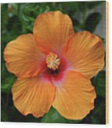 Clementine Hibiscus Wood Print
