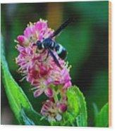 Clethra And Wasp Wood Print
