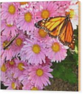 Cliff House Butterflies Wood Print