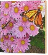 Cliff House Butterflies Wood Print