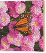 Cliff House Butterflies Ll Wood Print