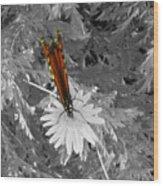 Cliff House Butterflies Lll Wood Print