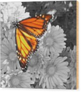 Cliff House Butterfly Wood Print