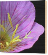 Climactic Evening Primrose Wood Print