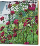 Climbing Roses Wood Print