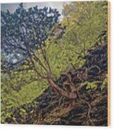 Climbing Tree Roots Wood Print