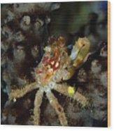 Clinging Crab On Sea Rod Wood Print