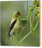 Clinging Goldfinch Wood Print