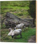 Clint's Sheep  Wood Print