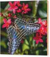 Clipper Butterfly 1 Wood Print