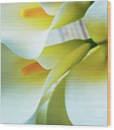 Close Up Calla Lilies Wood Print