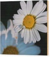 Close Up Daisy Wood Print