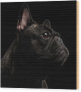 Close-up French Bulldog Dog Like Monster In Profile View Isolated Wood Print