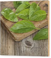 Close Up Fresh Basil Leafs On Rustic Serving Board  Wood Print