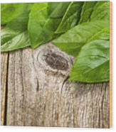 Close Up Fresh Basil Leafs On Rustic Wooden Boards Wood Print