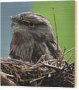 Close Up Look At A Tawny Frogmouth Sitting In A Nest Wood Print