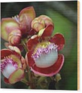 Close-up Macro Of Flower And Fruit Of Cannonball Tree Wood Print