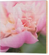 Close Up Macro Peony Flower Wood Print