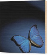 Close-up Of A Blue Butterfly Wood Print