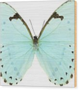 Close-up Of A White Butterfly Wood Print by Stockbyte