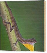Close-up Of An Anole, Tortuguero, Costa Wood Print