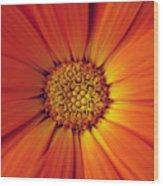 Close Up Of An Orange Daisy Wood Print