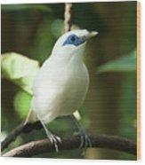 Close-up Of Bali Myna Bird In Trees Wood Print