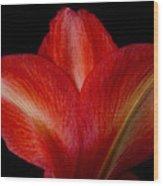 Close-up Of Colorful Amaryllis Flower Petals Wood Print