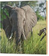 Close-up Of Elephant Behind Bush Facing Camera Wood Print