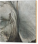 Close Up Of Eye And Ear Of An Elephant Wood Print