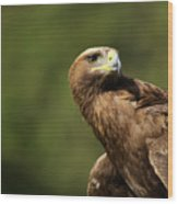 Close-up Of Golden Eagle With Head Turned Wood Print