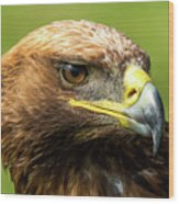Close-up Of Golden Eagle With Turned Head Wood Print