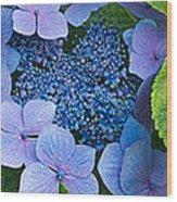 Close-up Of Hydrangea Flowers Wood Print