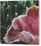 Close Up Of Leaf And Frost Wood Print