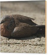 Close-up Of Mottled Pigeon On Sandy Ground Wood Print