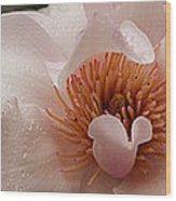 Close-up Of Pink Ladies Flowers Wood Print