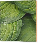 Close-up Of Raindrop On Green Leaves Wood Print