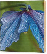 Close-up Of Raindrops On Blue Flowers Wood Print