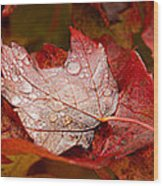 Close-up Of Raindrops On Maple Leaves Wood Print
