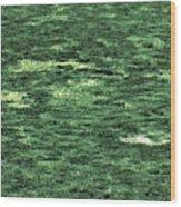 Close-up Of Scum Pong Wood Print