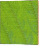 Close Up Of Taro Leaf Wood Print