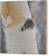 Close-up Of The Bark Of A Birch Tree Wood Print by Vlad Kharitonov