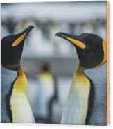 Close-up Of Two King Penguins In Colony Wood Print