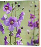 Close Up Of Verbascum Phoeniceum Wood Print