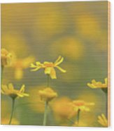 Close Up Of Yellow Flower With Blur Background Wood Print
